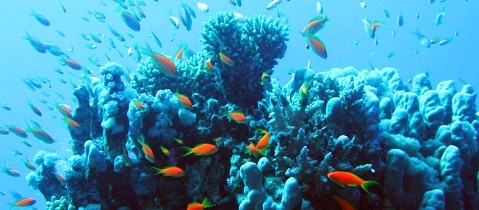 hurghada-coral-reef.jpg - Pyramids and Red Sea