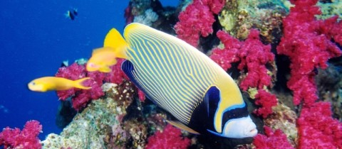 Redsea_Web_pic.jpg - Red Sea